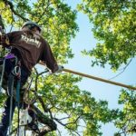 Tree Pruning Tips for the Homeowner